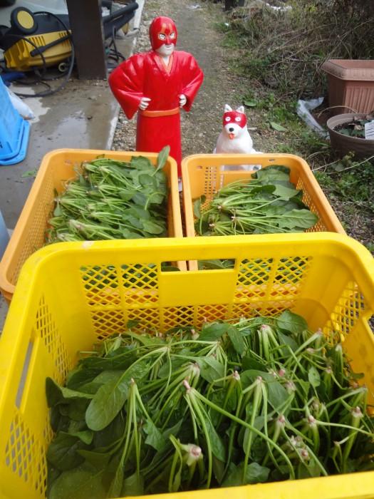橋本さんちの採れたて野菜♪