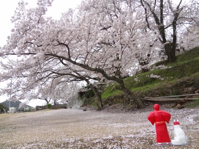 桜満開🌸🌸🌸つねやま🗻