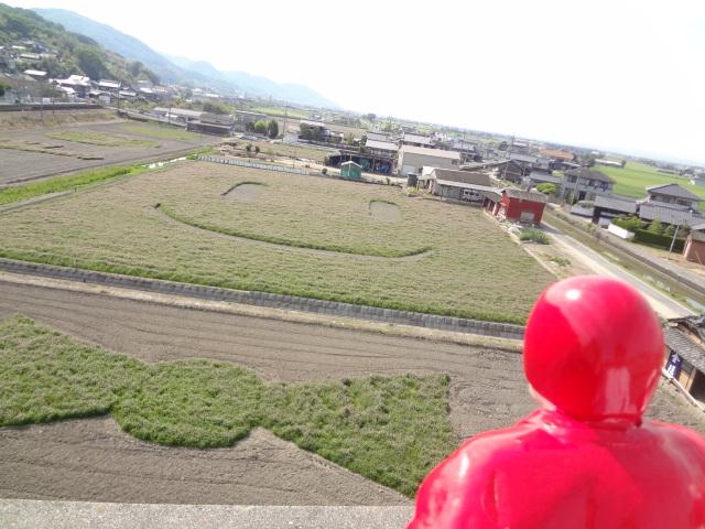 🌷🌷🌷常山駅前の田んぼアート🌷🌷🌷