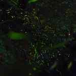 蛍祭り✨風景⤴⤴