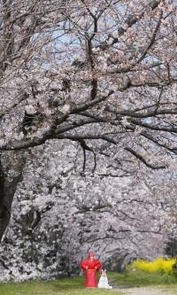 プチお花見 🌸 in 常山 & 横田公園 & 広岡公園